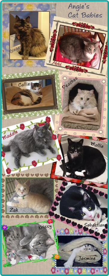 What a beautiful collection of well-loved and pampered cats!